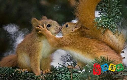 被亲有唇印的小动物图片
